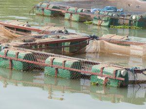 technique de la pisciculture